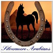 Silvermere Arabians