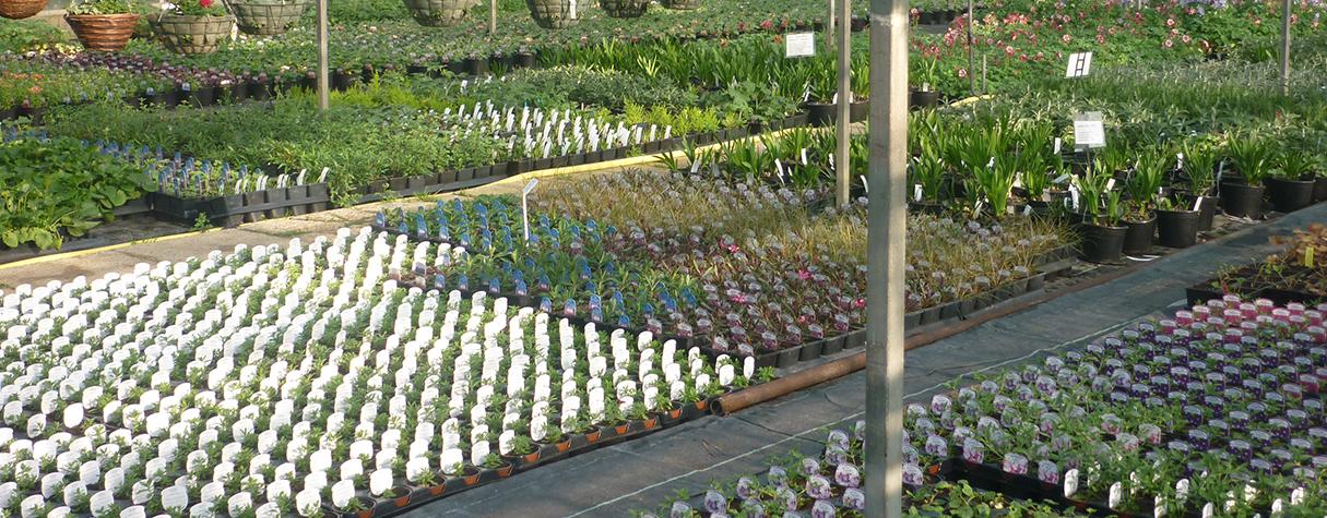 Nursery Small Plants